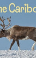 The Caribou (English)