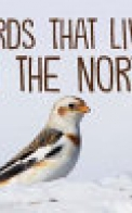 Birds That Live in the North (English)