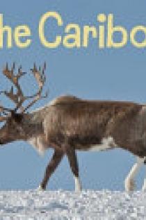 The Caribou (English)