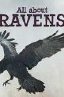 All about Ravens (English)