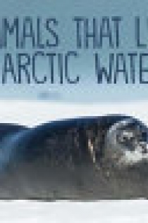 Animals That Live in Arctic Waters (English)