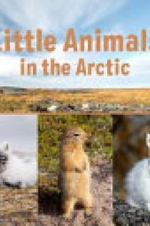 Little Animals in the Arctic (English)
