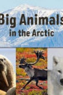 Big Animals in the Arctic (English)